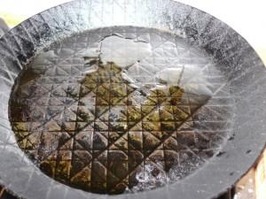 Mit etwas Rapsöl in einer Eisenpfanne anbraten