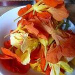 Kapuzinerkresse-Blüten